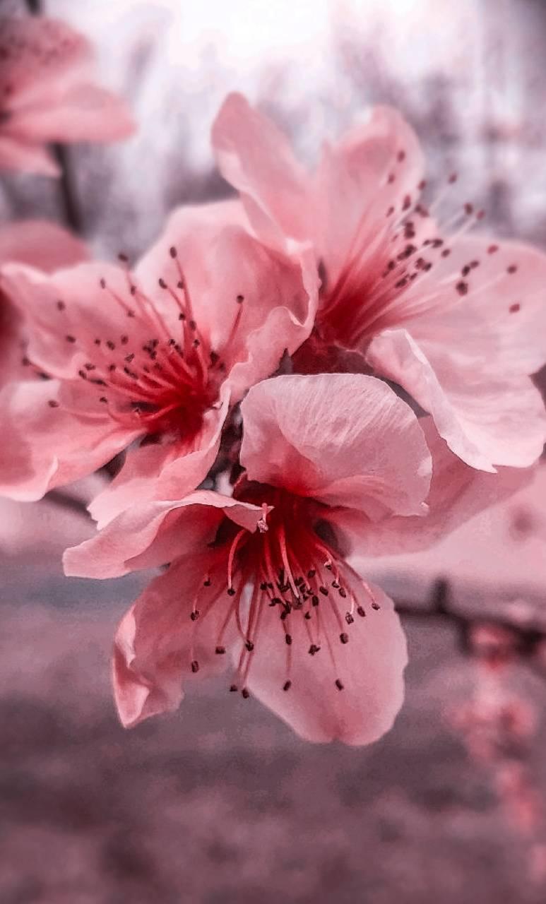 Spring time blooms 2
