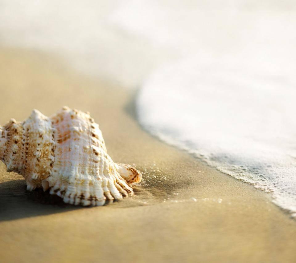 Whelk-shell