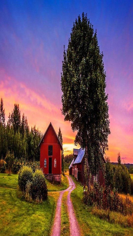 Sunset trees road