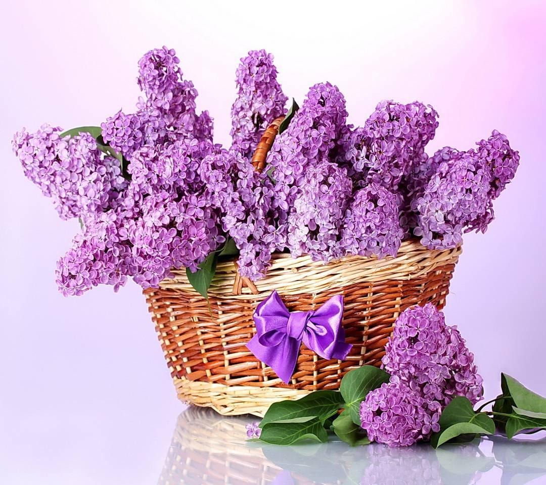 Basket Of Lilacs