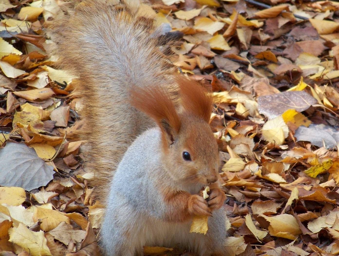 Squirrell3