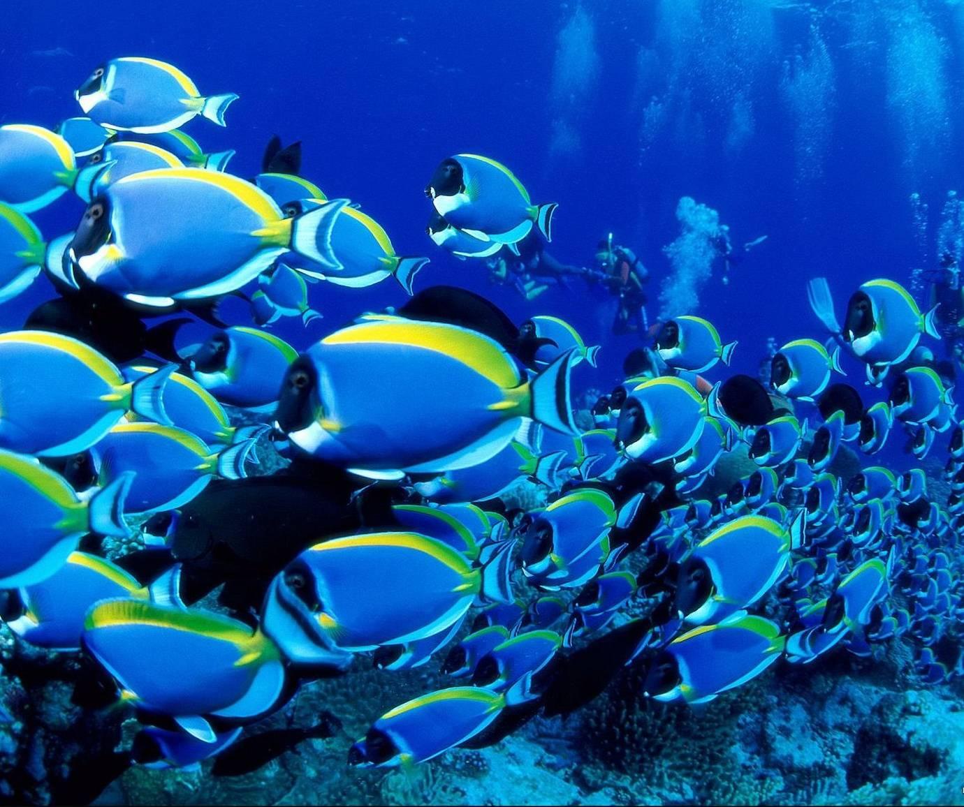 Ocean Life Wallpaper By Nology Aa Free On Zedge