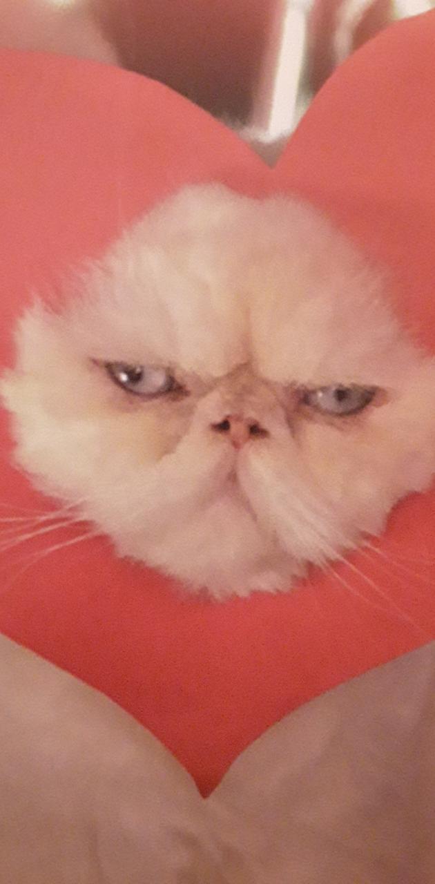 Grumpy love