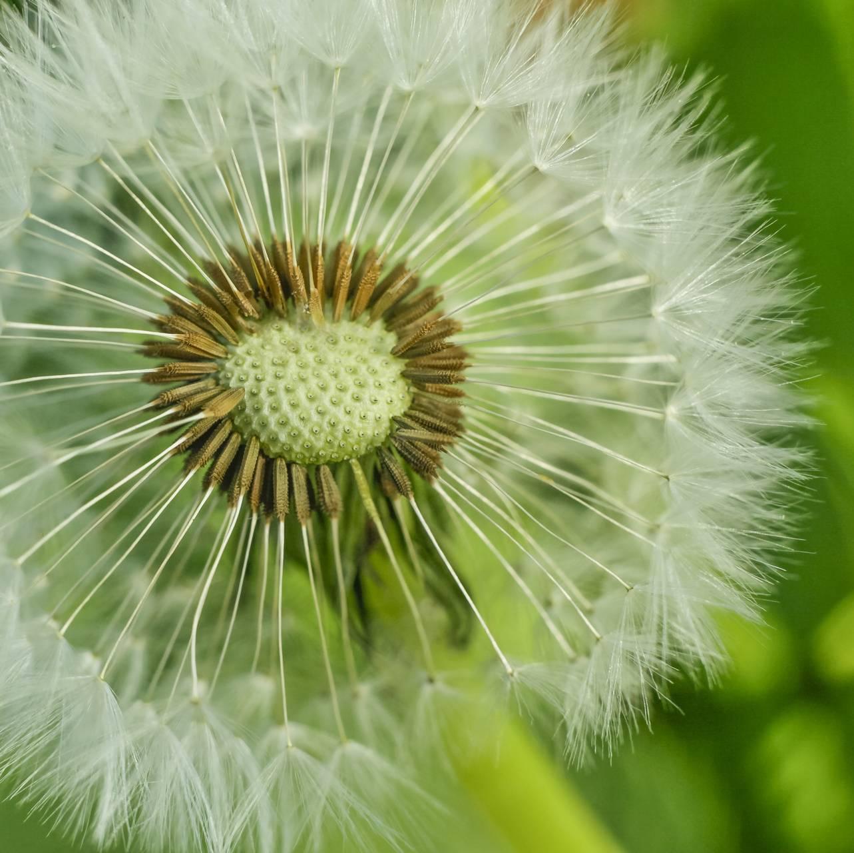 Light Seeds