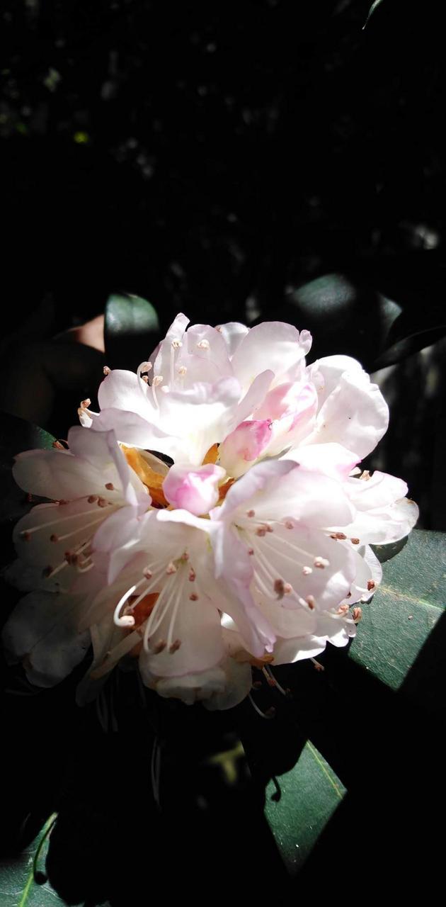 Flower spotlight