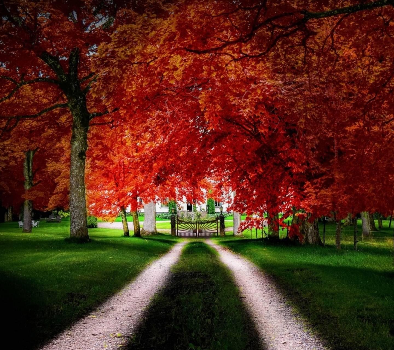 Autumn Alleyway