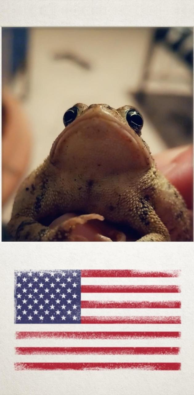MERICA the frog