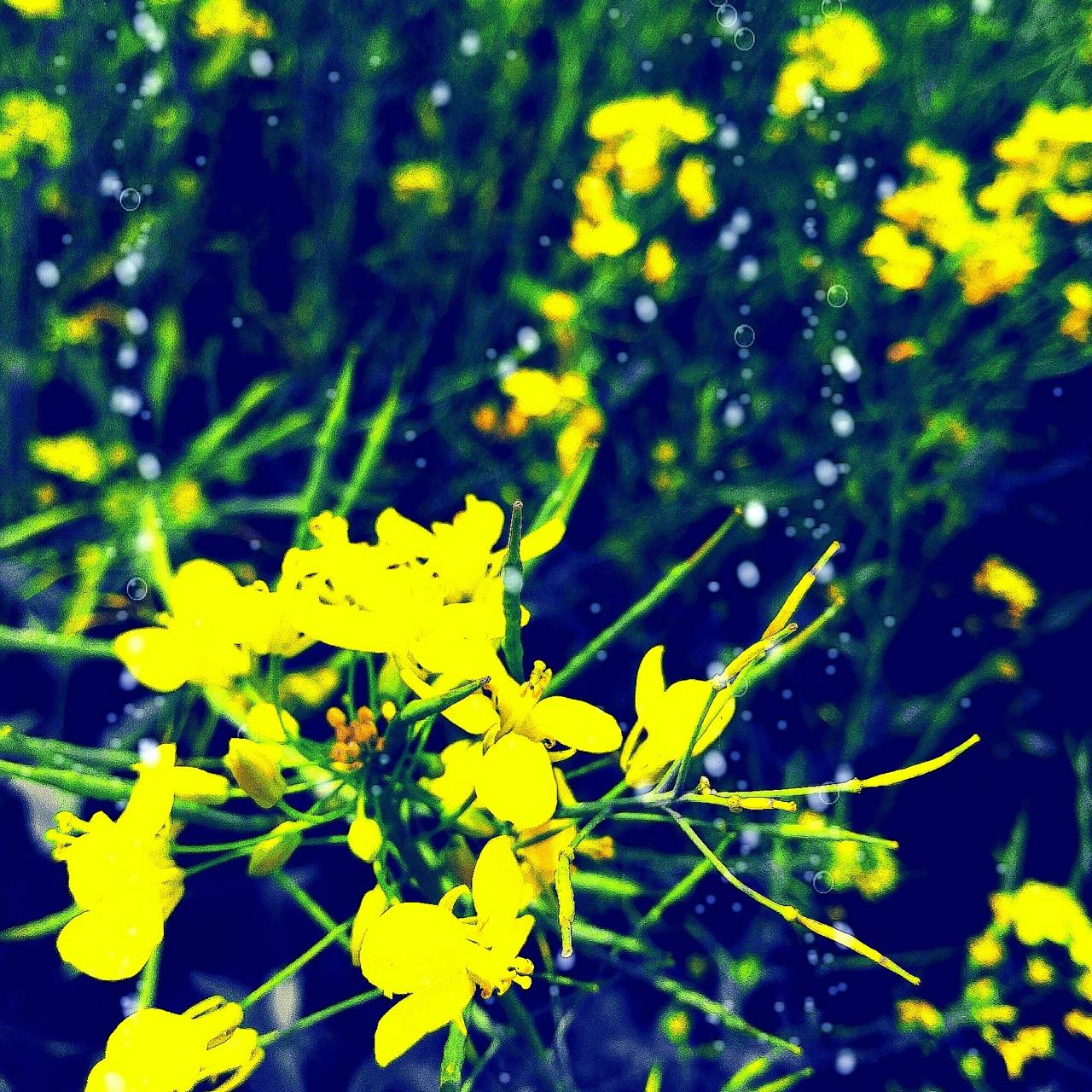 Yellow fllower