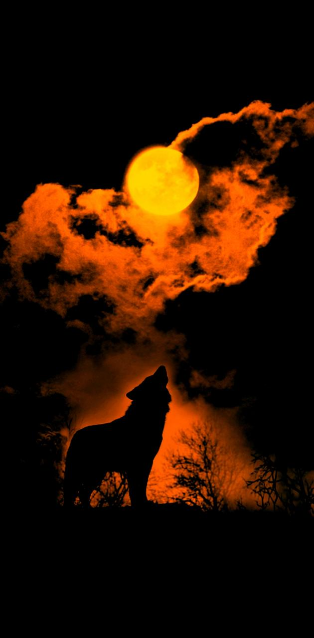 The Wolf n The Moon