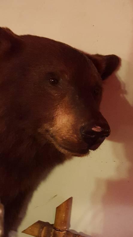 Bear in house