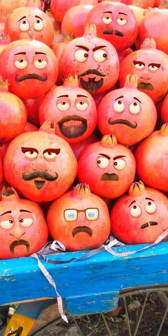 Pomegranate family