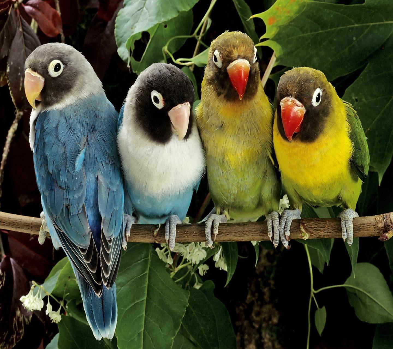 Love Birds wallpaper by _LuCkyman_ - 65 ...