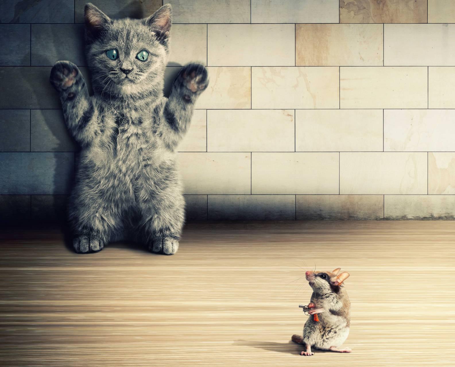 cowardly cat