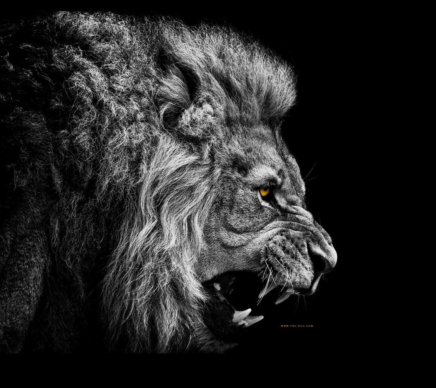 Lion - No Fear Wallpaper by gill123321 - 24