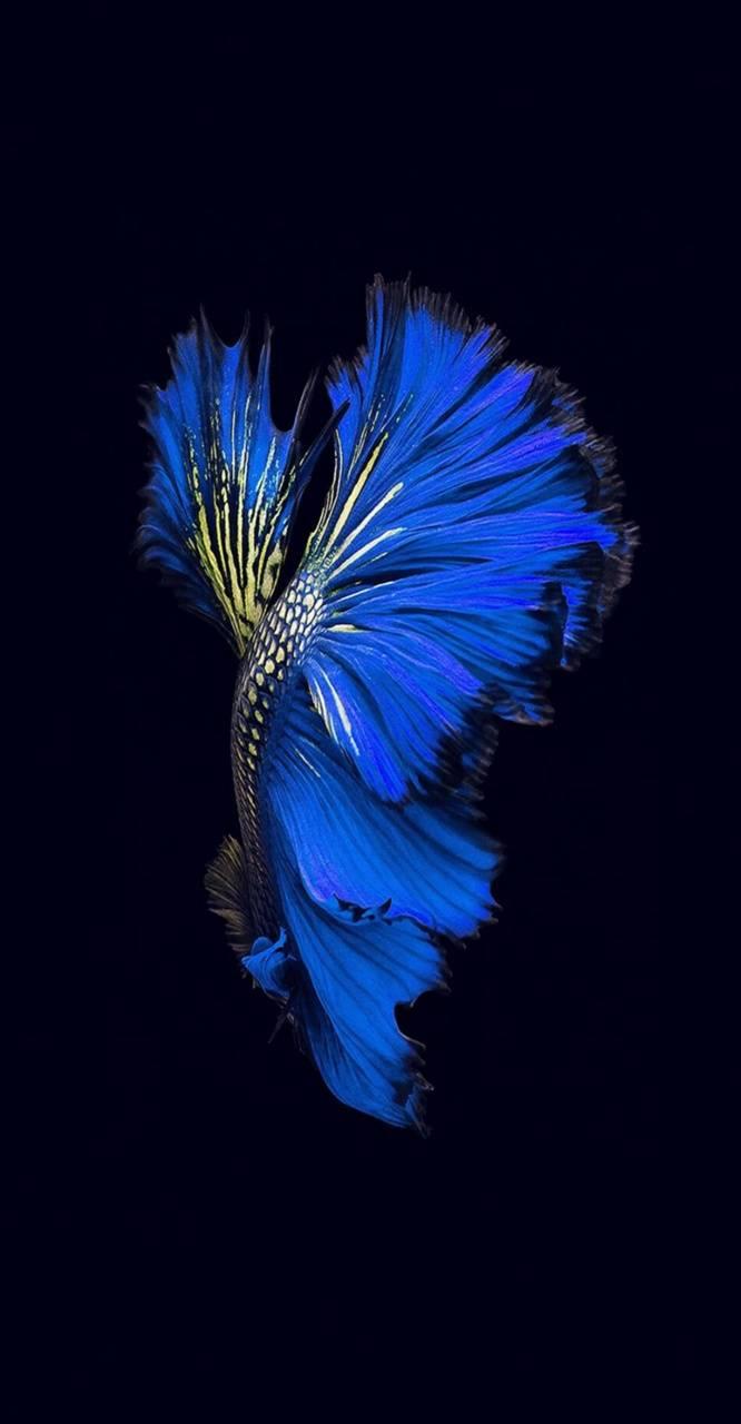 Iphone fish blue