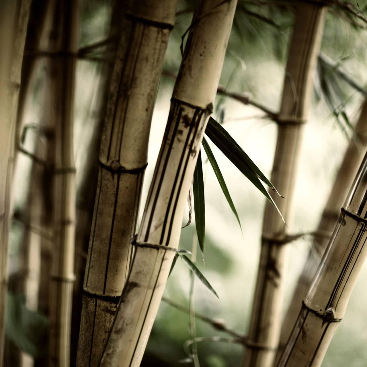 Weathered Bamboo