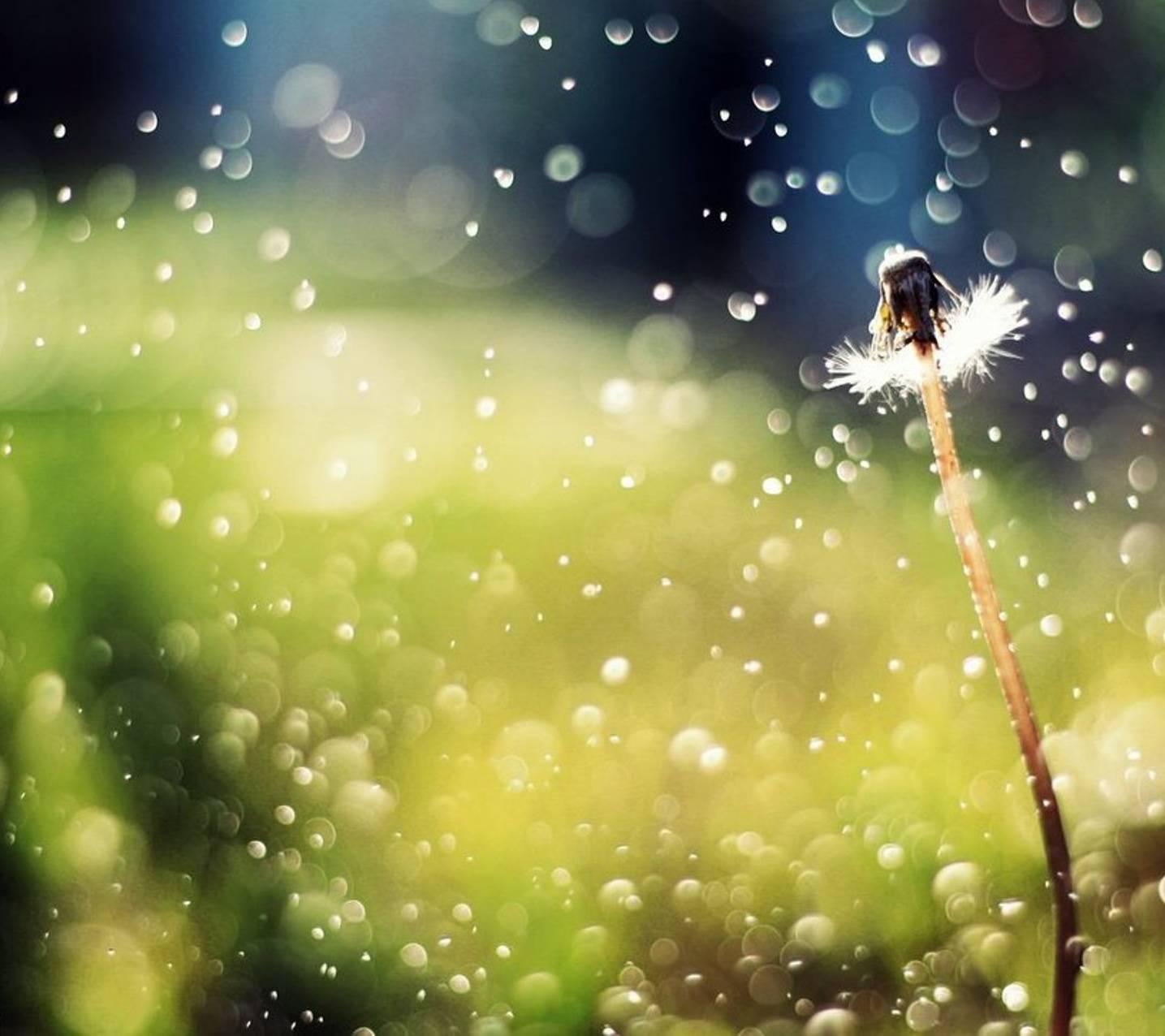 Rain Nature