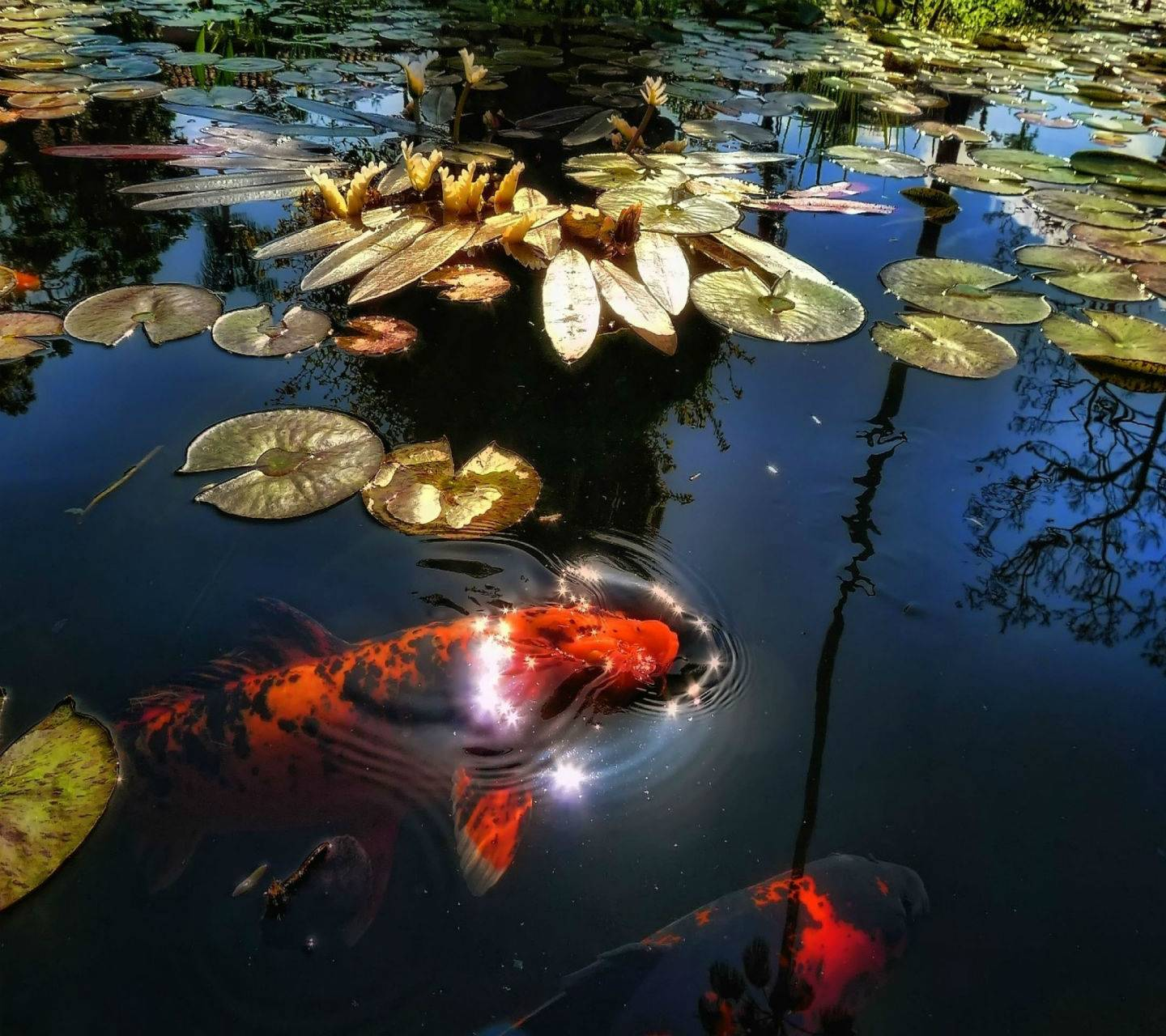 Tropical Pond Hd