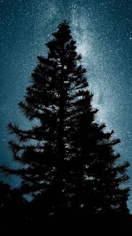 milky way pine tree