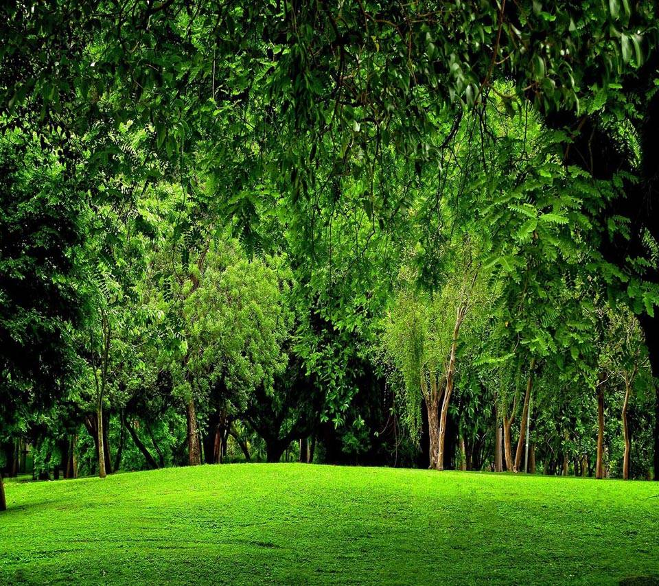 Green Forest Scenery