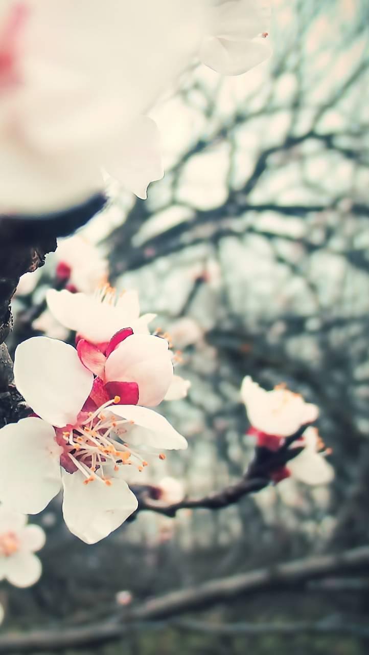 Blossom Tree Flowers