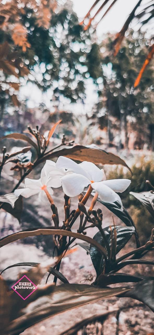 Quari Flower