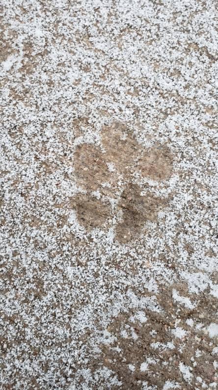 Animal snow