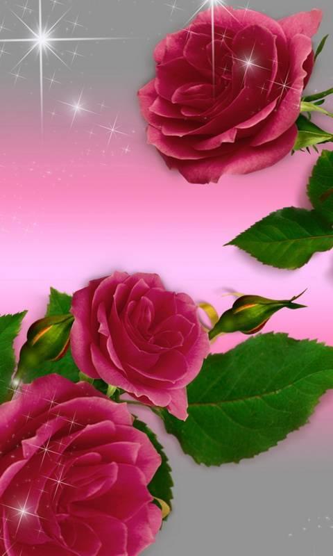 Shining Roses