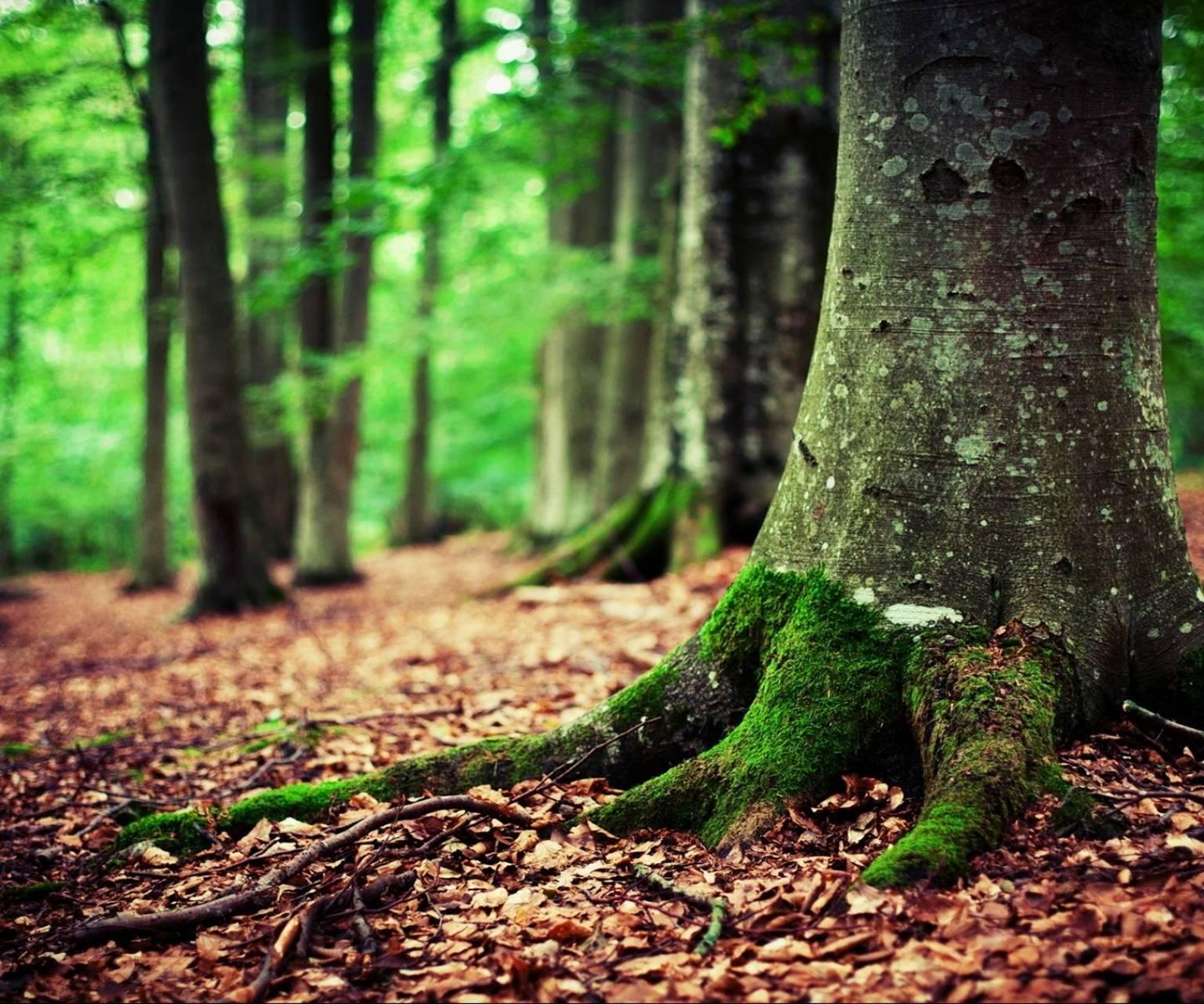 natural trunk