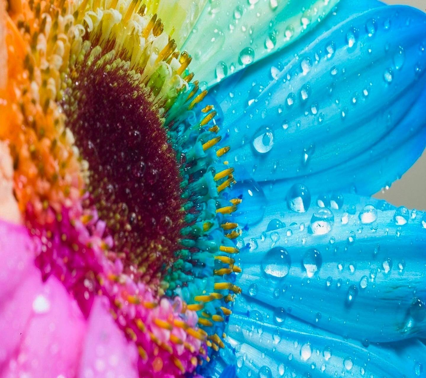 Hd Colorful Flower