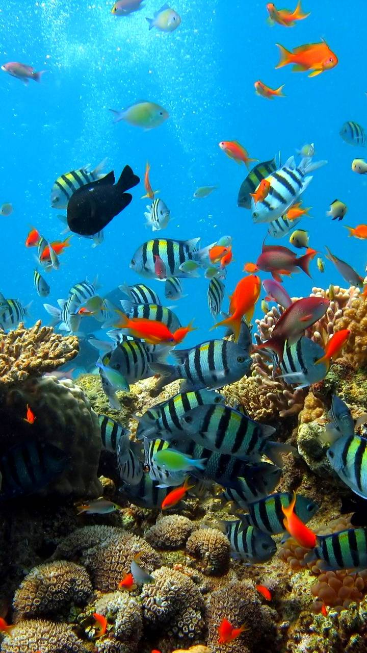 Under the ocean