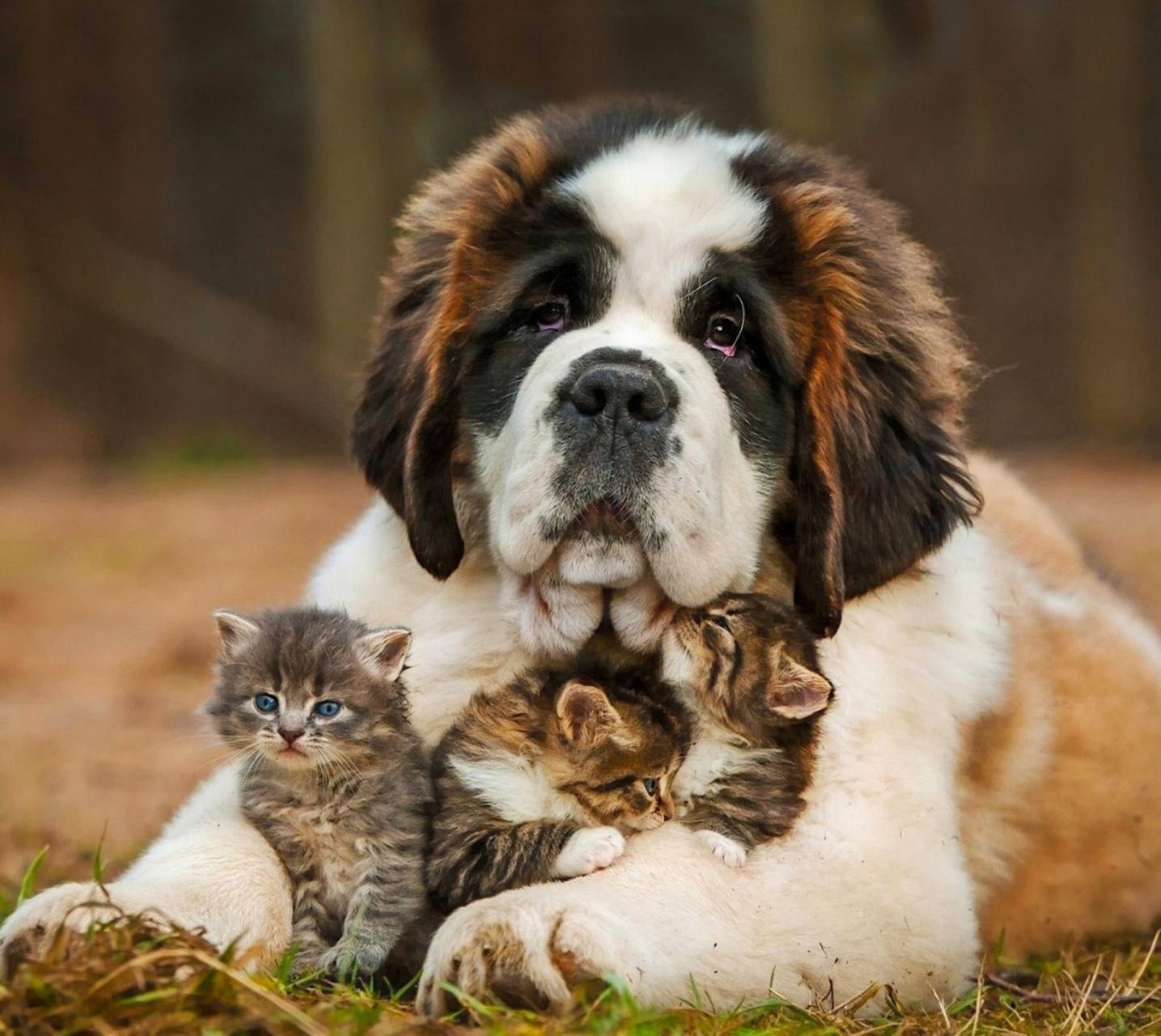 Dog and small Cats