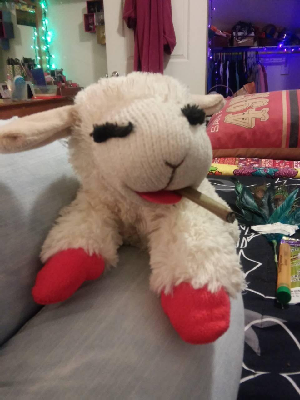 Lambchop blunts up