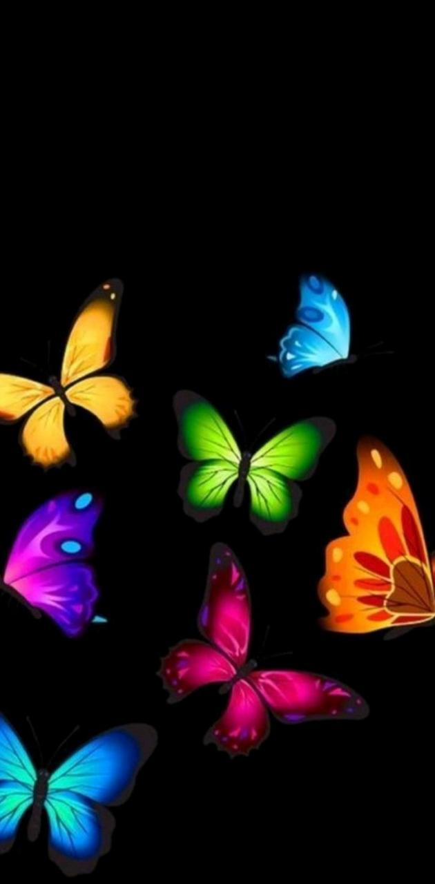 Colours butterfly
