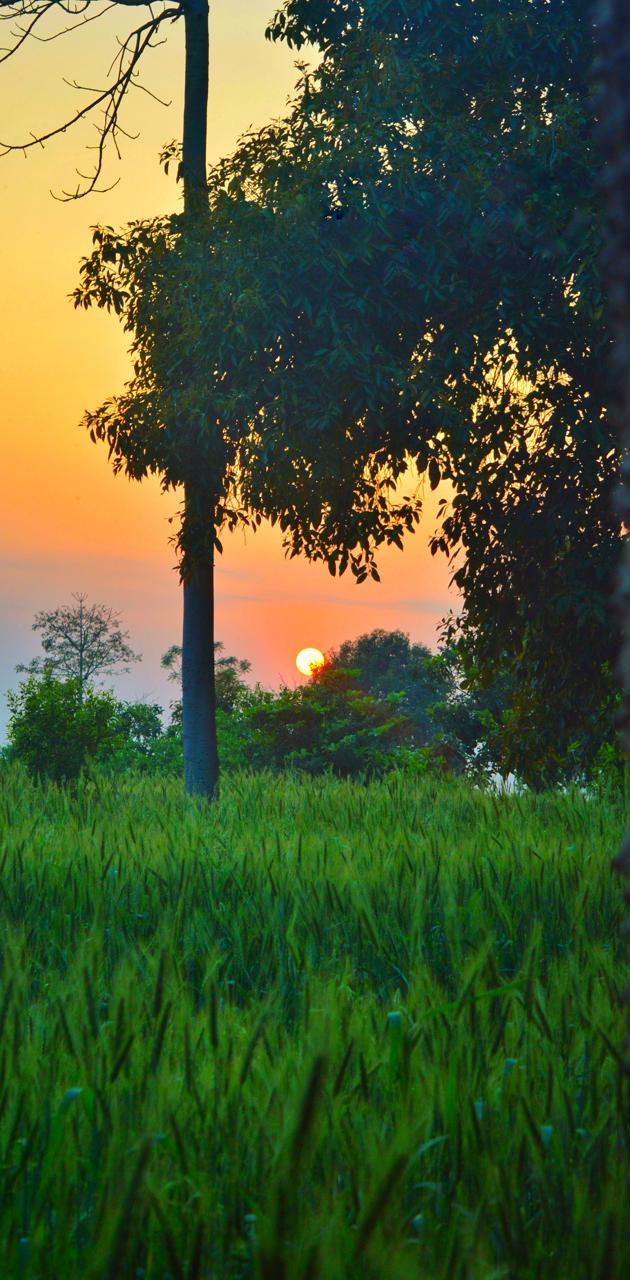 Sunset at Village