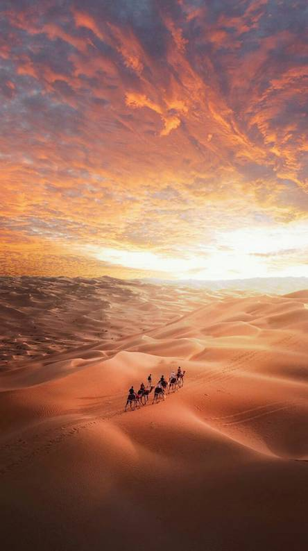 Crossbow Camel Desert Ringtones And Wallpapers Free By Zedge