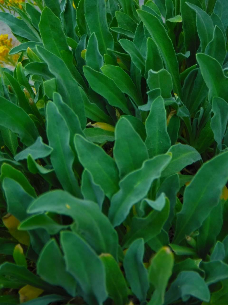 Spring green leaved