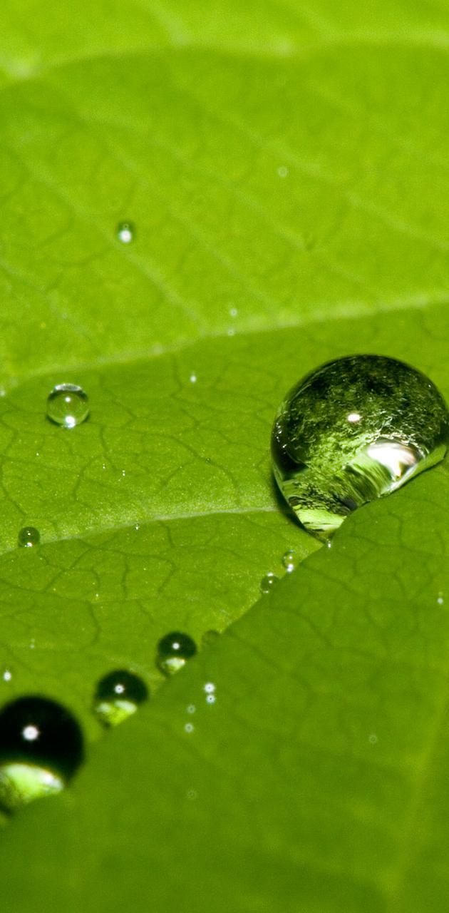 Dew Drops Macro