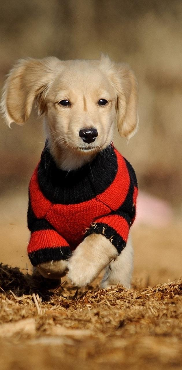 Wooly Jumper