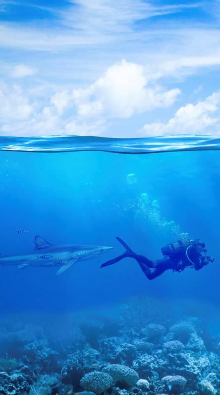 Ocean Shark Chase 4k