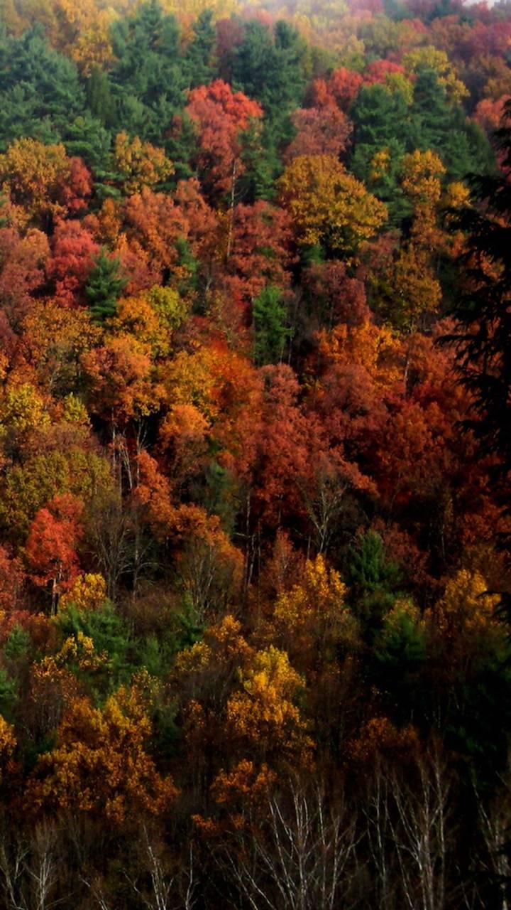 Autumn Color in Ohio
