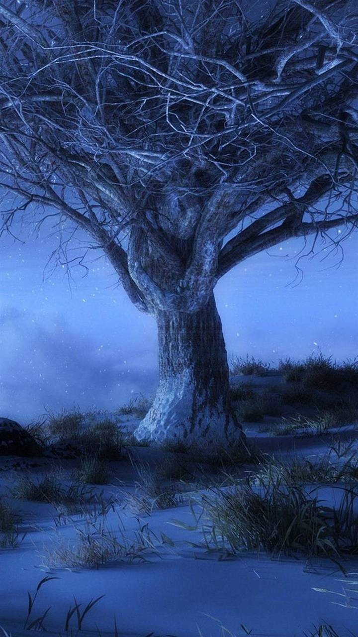 Old tree in the nigh