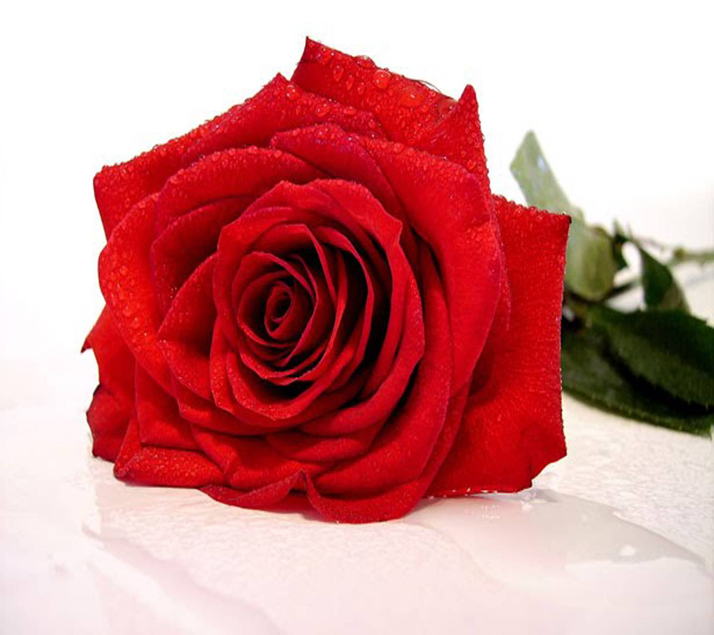 Sweet Rose Hd