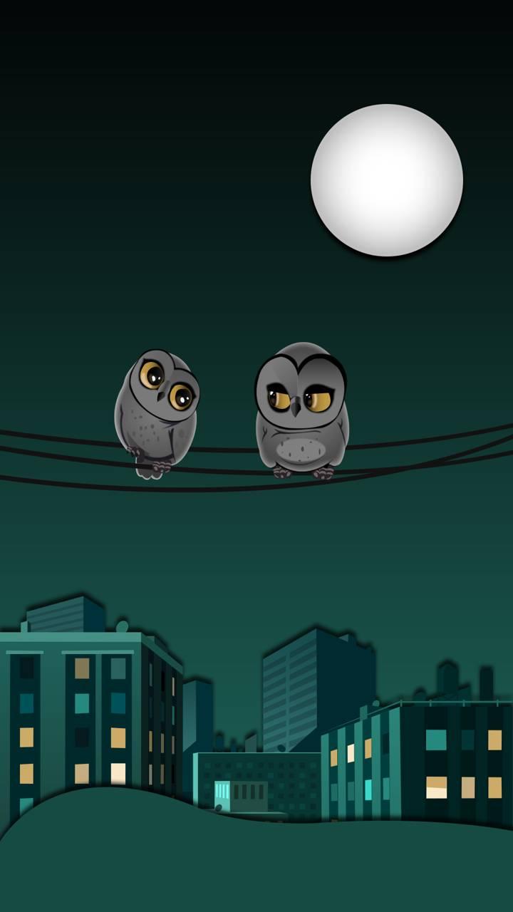 Excitement Owls