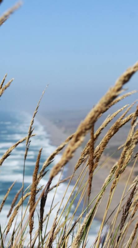 Point Reyes Beach