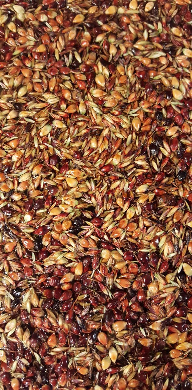 Autumn seeds