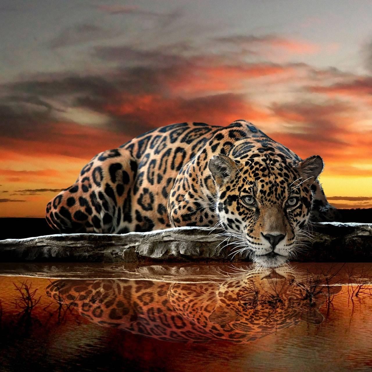 Abstract Jaguar