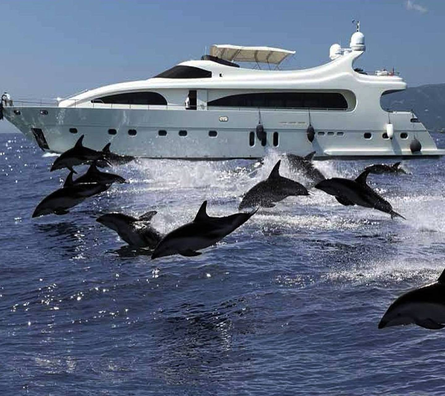 Sea And Dolphins