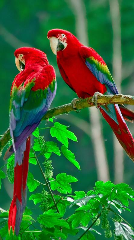 Birds Wallpapers Free By Zedge