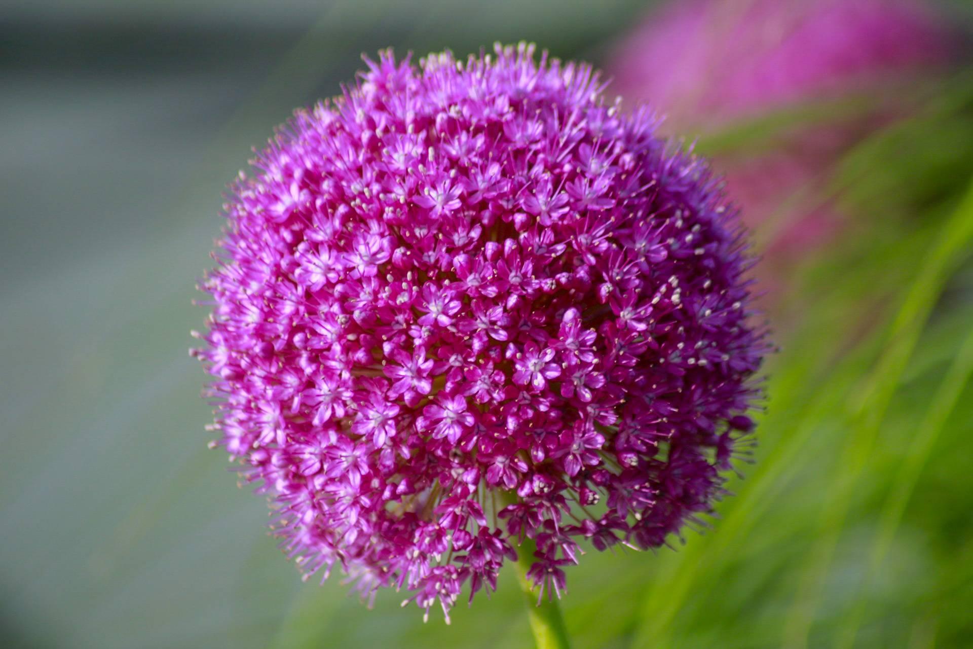 Beautyfull flower